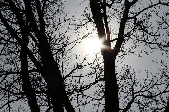 מאור מאיר שפריר – פסיכותרפיסטית